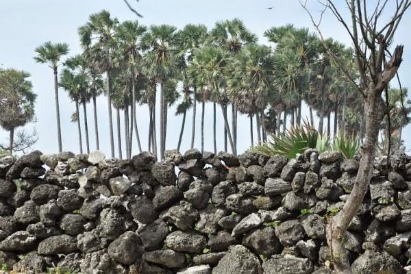 Pics by Rasika Kotudurage